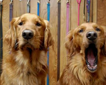 Quick Dog Tip of the Day:  What is Deprivation in Dog Training?