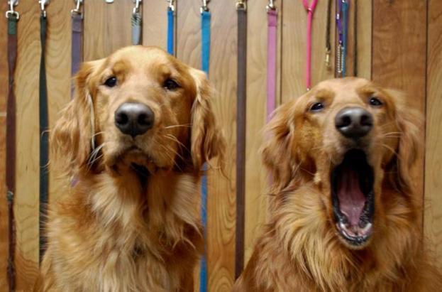 dog-behavior-linked-to-sleep