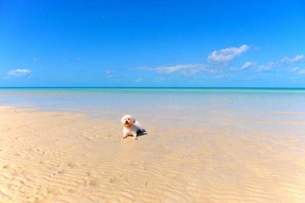 dog-insurance-claims-sand