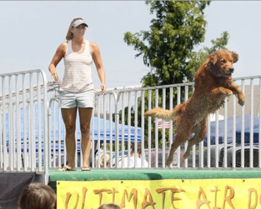 Dogs Compete for the Air Dog Title in Ohio