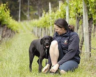Quick Dog Tip of the Day:  Do Not Feed Your Dog Grapes or Raisins