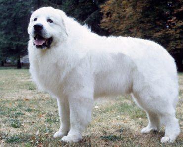 Ten of the Quietest Dog Breeds