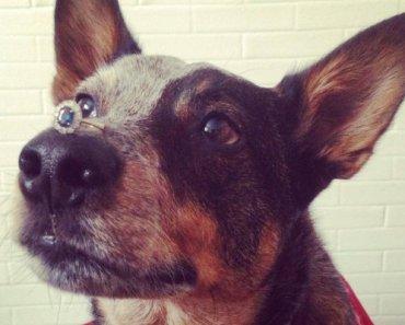 Balancing Dog Jack Helps His Owner Propose