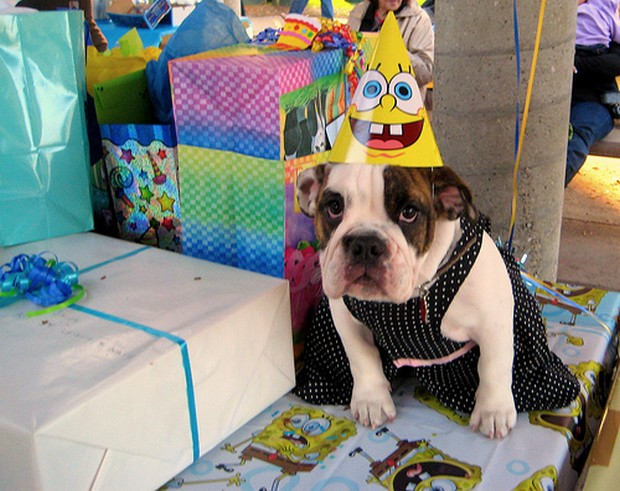 Party_Dog_5