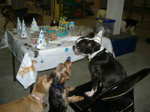 Party_Dog_7