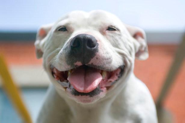 Smiling-Dog1