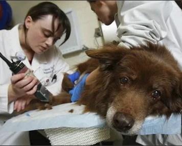 Dog Cancer Survivors