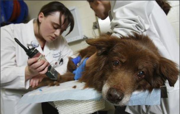 canine-cancer-symptoms