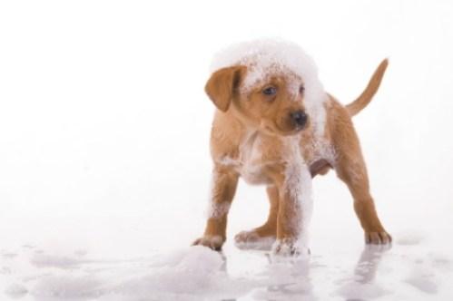 clean-dog