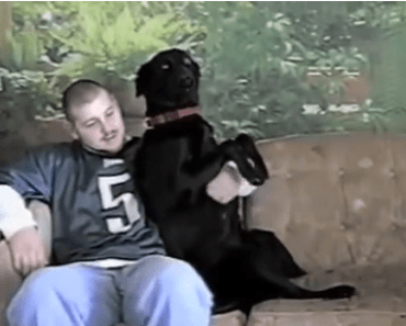 One of the Most Loving Labs Ever Knows how to Cuddle