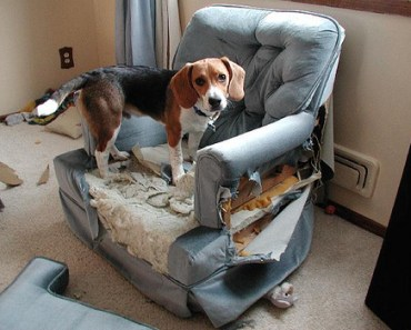 How to Deal with Misbehaving Dogs