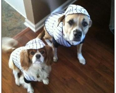 Rescue Dogs Ready to Play Ball!