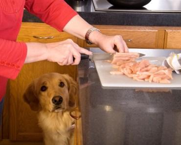 Be Careful Feeding Your Dog Homemade Dog Food