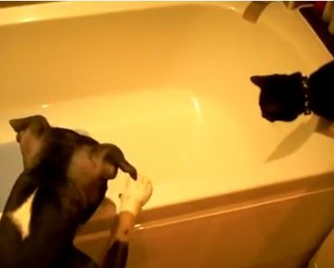 Dog Helps a Cat Get into the Bath