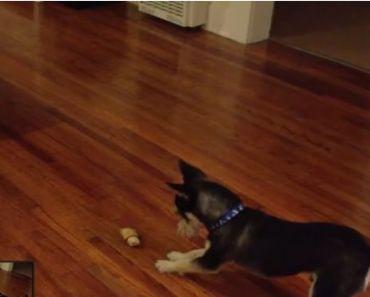Cute Dog has Funny Way of Eating a Bone