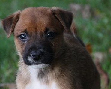 Eight Puppies are Rescued and Given New Chance at Life