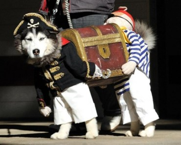 Some of the Cutest Halloween Costumes for Dogs