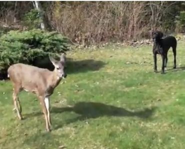 Dog and Deer are Best Friends Forever