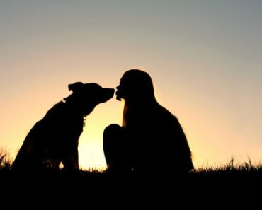 Ten Amazing Dogs Saving Humans Rescue Stories