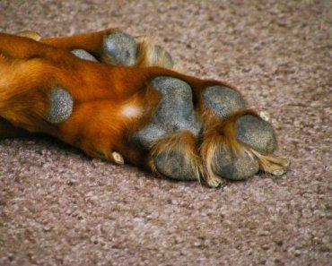 Paw Problem Prevention and Treatment