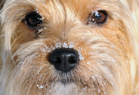 A dog has ice on its face in Berlin on F