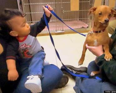 Toddler and Dog With Same Affliction Share Life Together
