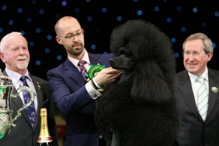 Jason Lynn runs Ricky the Standard Poodle