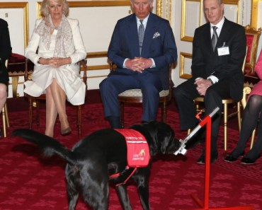Prince Charles and Camilla Watch A Demonstration By Medical Detection Dogs