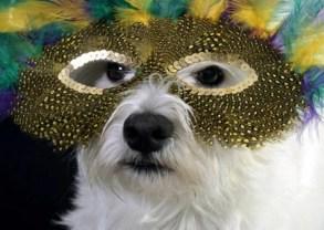 Now that's the spirit of Mardi Gras!