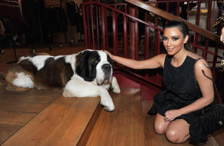 Saint Bernard and Kim Kardashian