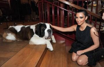 Saint Bernard and Kim Kardashian