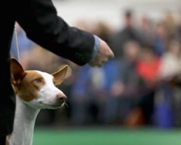 Top Ten Least Affectionate Dog Breeds