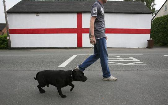 pit bull goes for walk in London