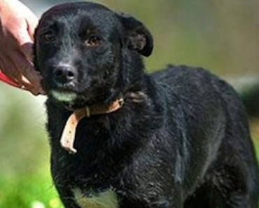Sochi Rescue Dog Looking To Be Adopted, Thanks To Pacific Grove Rescue Group