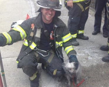 Firefighters Take in Dog They Rescued While Owner is in the Hospital