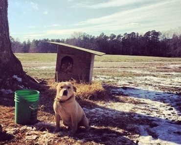 Prison Inmates Do Good By Building Houses For Lonely Backyard Dogs
