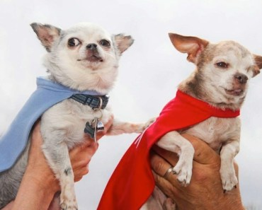 Two Puppy Mill Survivors Will Take to the Road to Rescue Dogs