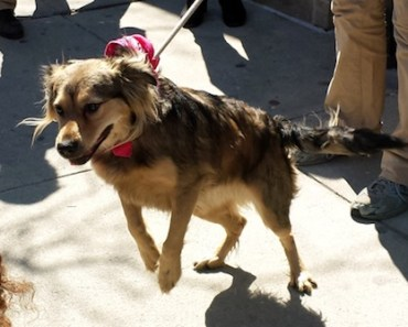 Dog Rescued From Tracks After Chasing New York Train