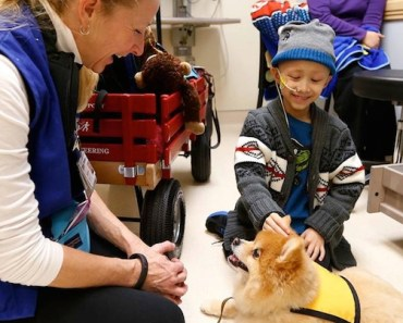 Study Tests Power of Dogs Against Cancer