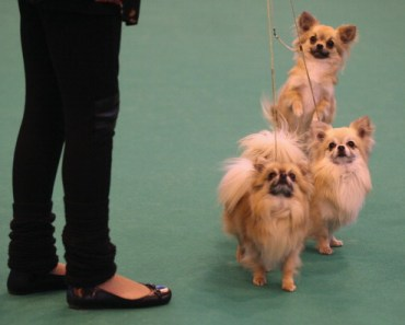 Five Unusual Male Dog Names (And What They Mean)