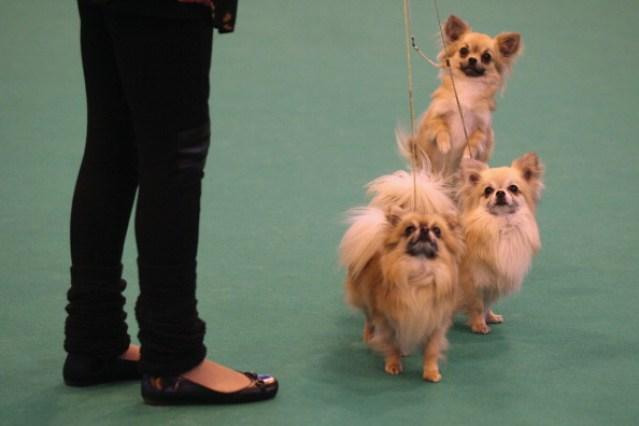 Five Unusual Male Dog Names