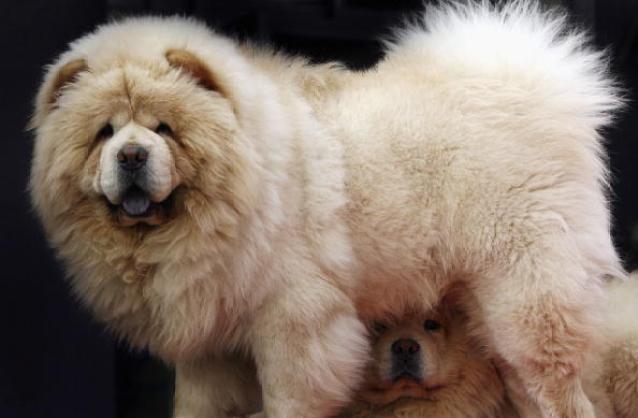 Pet Market In Beijing