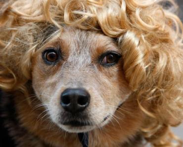 25 Best Female Dog Names Of 2014