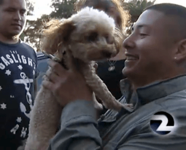 Lost Service Dog is Reunited With Owner