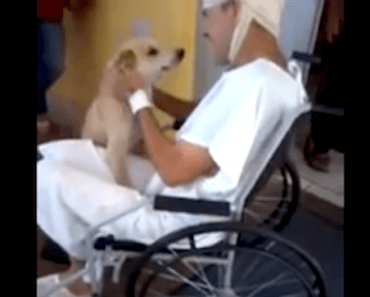 Incredibly Loyal Dog Waits Outside the Hospital for Eight Days