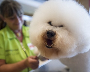 Ten of the Most Bizarre Dog Laws in the World