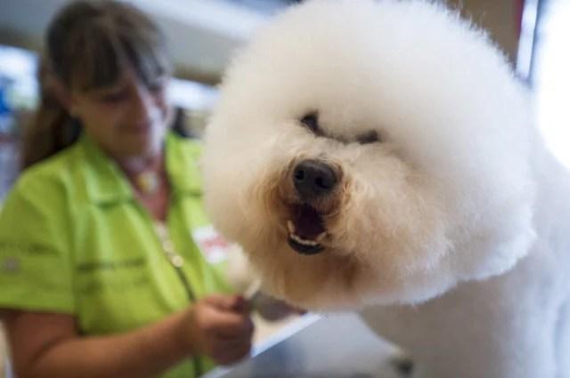 International Dog Grooming Championships