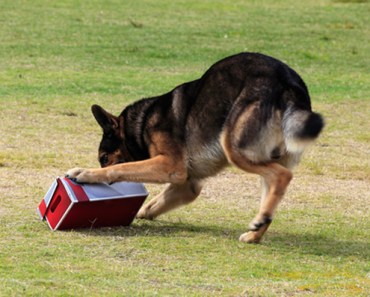 Dogs are Now Trained to Sniff Out Computer Hardware