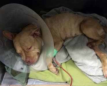 Fundraiser for Sick Dog is Slowed Down by Fake Donations
