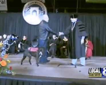 Service Dog Walks in Place of College Student Who Passed Away